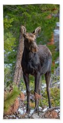 Young Moose In The Morning Forest Bath Towel