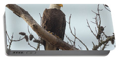Resting Bald Eagle Portable Battery Charger