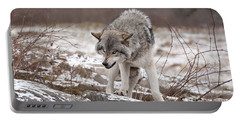 Portable Battery Charger featuring the photograph Adult Timber Wolf by Wolves Only