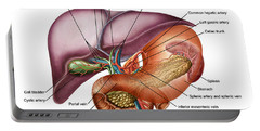 Anatomy Of Liver, Antero-visceral View Portable Battery Charger