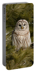 Barred Owl In A Pine Tree. Portable Battery Charger by Michel Soucy