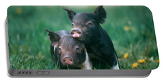 Domestic Piglets Portable Battery Charger
