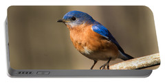 Eastern Bluebird Male 7 Portable Battery Charger