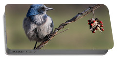 Florida Scrub Jay Portable Battery Charger
