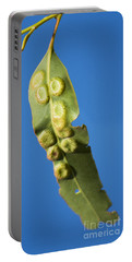 Gum Leaf Galls Portable Battery Charger