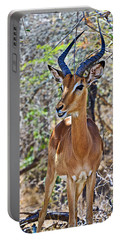 Male Impala In Kruger National Park-south Africa   Portable Battery Charger