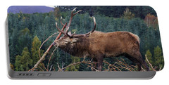 Rutting Red Deer Stag  Portable Battery Charger
