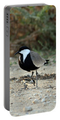Spur-winged Plover And Chick Portable Battery Charger