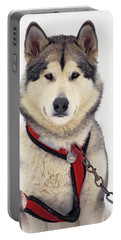 1990s Malamute Canis Lupus Familiaris Portable Battery Charger