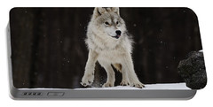 Portable Battery Charger featuring the photograph Arctic Wolf by Wolves Only