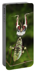 Devils Praying Mantis In Defensive Portable Battery Charger