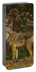 The Coyote Portable Battery Charger