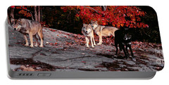 Timber Wolves Under A Red Maple Tree - Pano Portable Battery Charger