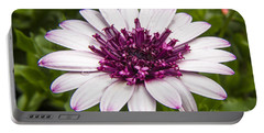 3d Berry White Cape Daisy - Osteospermum  Portable Battery Charger