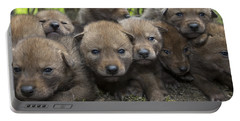 4 Week Old Wild Coyote Pups In Chicago Portable Battery Charger