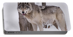 Timber Wolf In Winter Portable Battery Charger
