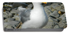 Portable Battery Charger featuring the photograph A Curious Seagull by Chalet Roome-Rigdon