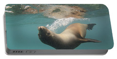 A Sea Lion Swimming Under The Waters Portable Battery Charger