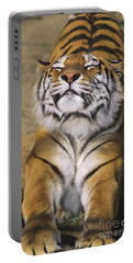 A Tough Day Siberian Tiger Endangered Species Wildlife Rescue Portable Battery Charger