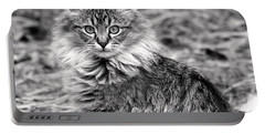 A Young Maine Coon Portable Battery Charger