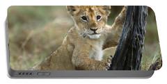 African Lion Cub Climbing Masai Mara Portable Battery Charger