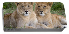 African Lion Juvenile Males Serengeti Portable Battery Charger