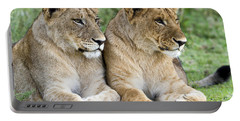 African Lion Juveniles Serengeti Np Portable Battery Charger