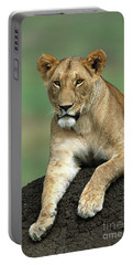 African Lioness Masai Mara Portable Battery Charger