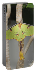 African Moon Moth Portable Battery Charger