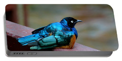 African Superb Starling Bird Rests On Wooden Beam Portable Battery Charger