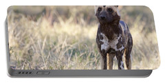 African Wild Dog  Lycaon Pictus Portable Battery Charger by Liz Leyden