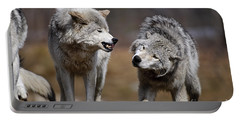 Portable Battery Charger featuring the photograph Alpha Displeasure by Wolves Only