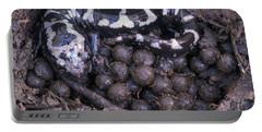 An Endangered Marbled Salamander Nests Portable Battery Charger