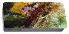 Portable Battery Charger featuring the photograph Arrow Crab In A Rainbow Of Coral by Amy McDaniel