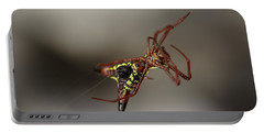 Arrow-shaped Micrathena Spider Starting A Web Portable Battery Charger