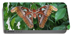 Portable Battery Charger featuring the photograph Atlas Moth #2 by Judy Whitton