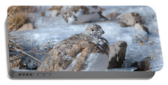 Portable Battery Charger featuring the photograph Autumn Plumage White-tailed Ptarmigan by Cascade Colors