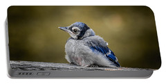 Baby Blue Jay Portable Battery Charger
