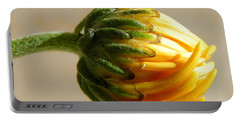 Portable Battery Charger featuring the photograph Baby Spider Mum by Deb Halloran