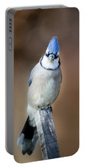 Backyard Birds Blue Jay Portable Battery Charger by Bill Wakeley