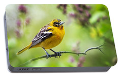 Baltimore Oriole II Portable Battery Charger by Christina Rollo