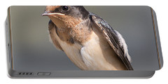 Portable Battery Charger featuring the photograph Barn Swallow On Rope I by Patti Deters