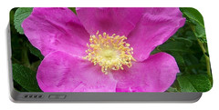 Pink Beach Rose Fully In Bloom Portable Battery Charger by Eunice Miller