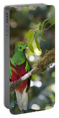 Beautiful Quetzal 1 Portable Battery Charger