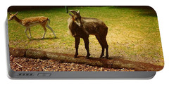 Billy Goat Keeping Lookout Portable Battery Charger by Amazing Photographs AKA Christian Wilson