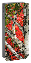Portable Battery Charger featuring the photograph Birch Eclipsing Maple by Doris Potter