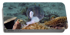 Portable Battery Charger featuring the photograph Birth Of Marine Cuttlefish by Sergey Lukashin