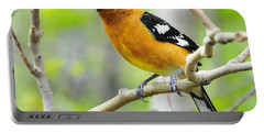 Blach-headed Grosbeak Portable Battery Charger