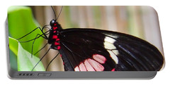Portable Battery Charger featuring the photograph Black And Red Cattleheart Butterfly by Amy McDaniel