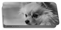 Black And White Portrait Of Pixie The Pomeranian Portable Battery Charger